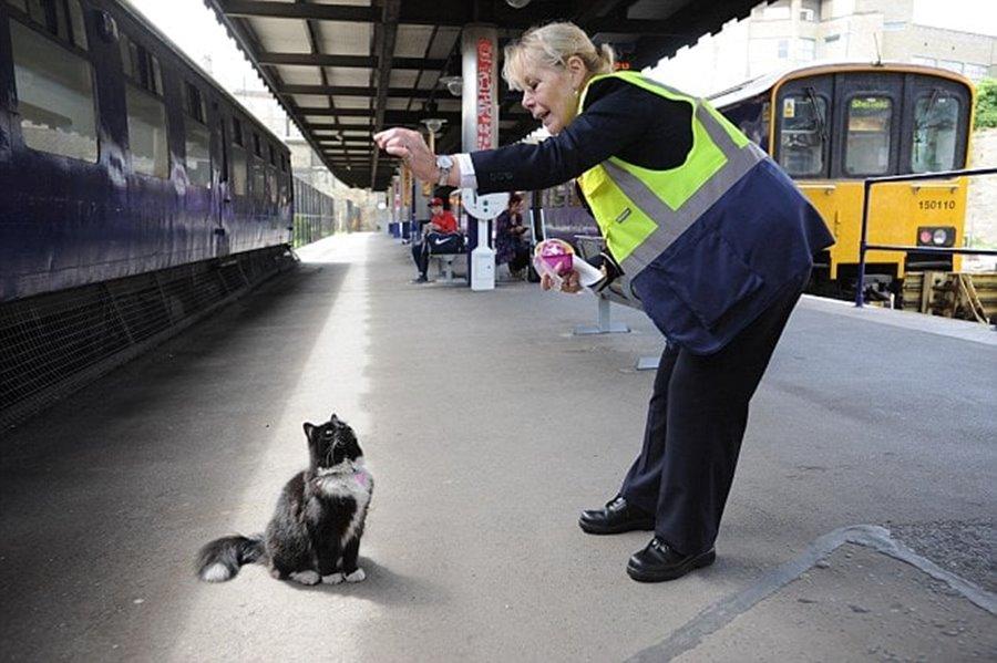 Кошка контролёр