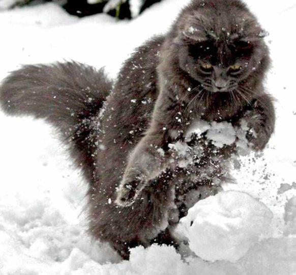 Кошка которая очень любит снег