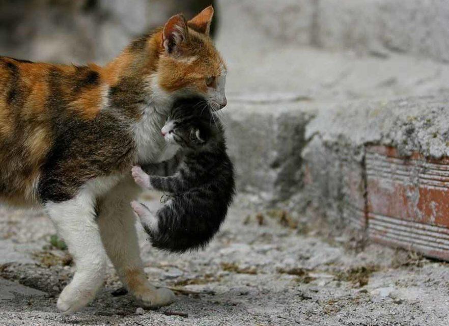 Кошка мать