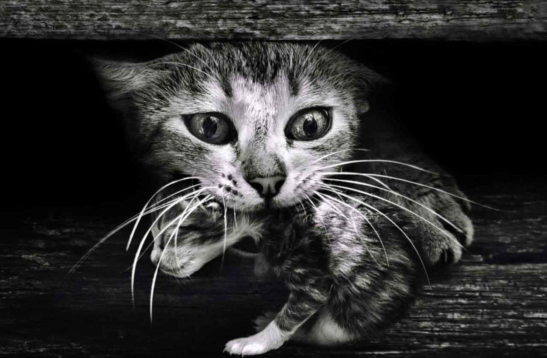 Кошки-матери