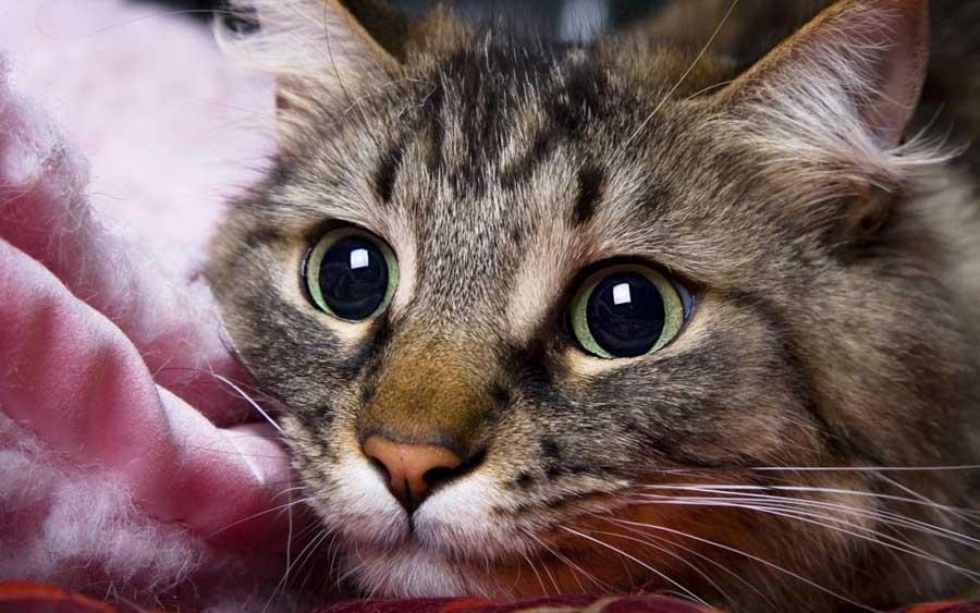 Кот метит подушки