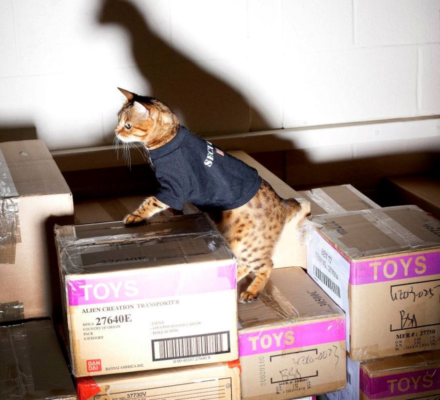 Кошка Милли
