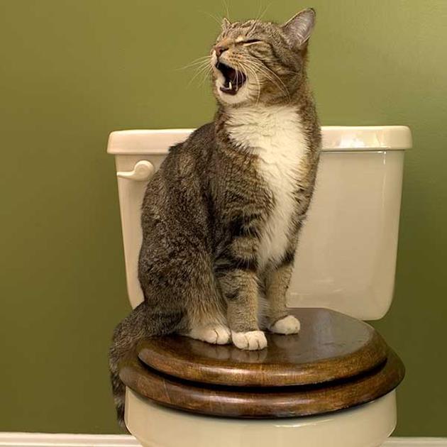Кошка не ходит в лоток