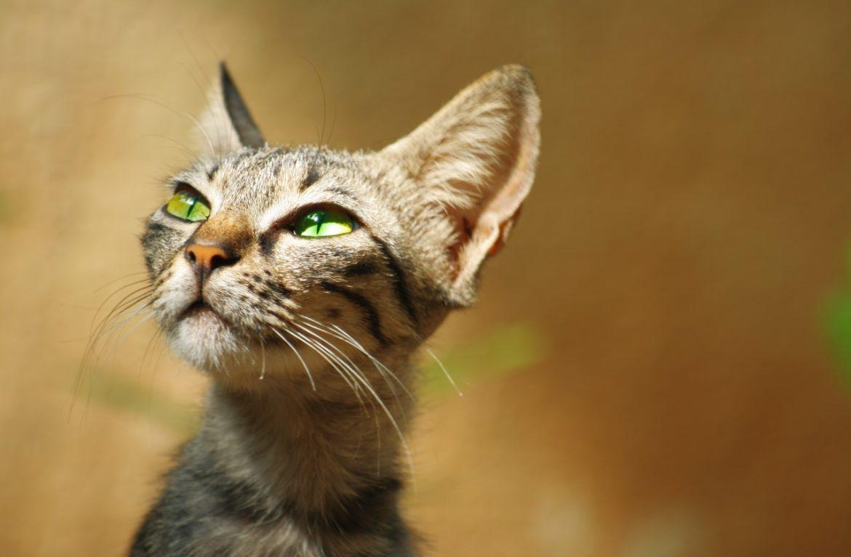 Если кошка худая: что делать, как помочь?