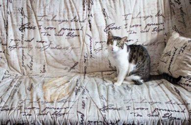 Кошка описала диван: как избавится от запаха