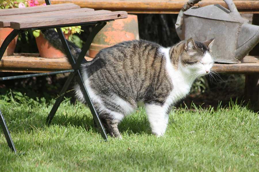 Кошка перестала ходить в лоток, что делать