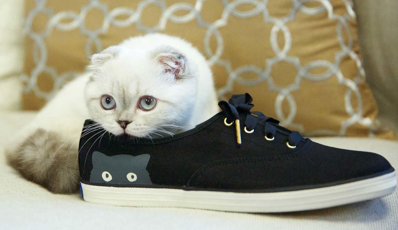 Как избавится от запаха мочи кота в обуви