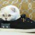 Кошка пометила обувь: как избавиться от запаха?