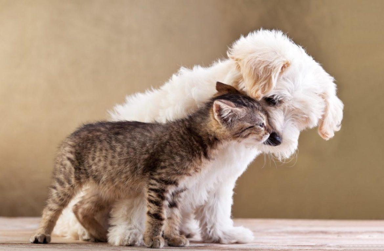 Трогательное видео: кошка помогает слепой собаке на прогулке