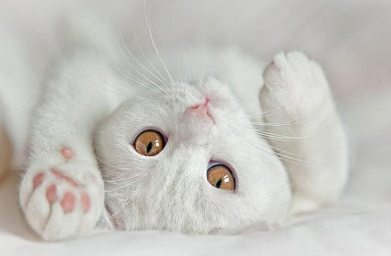 Понимает ли кошка человеческий язык?