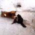 Кошка привела котят к своему старому другу