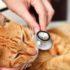 Кот чихает — значит, простыл? Причины чихания кошек
