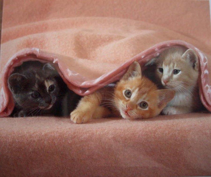 Почему кошка прячет котенка под одеялом