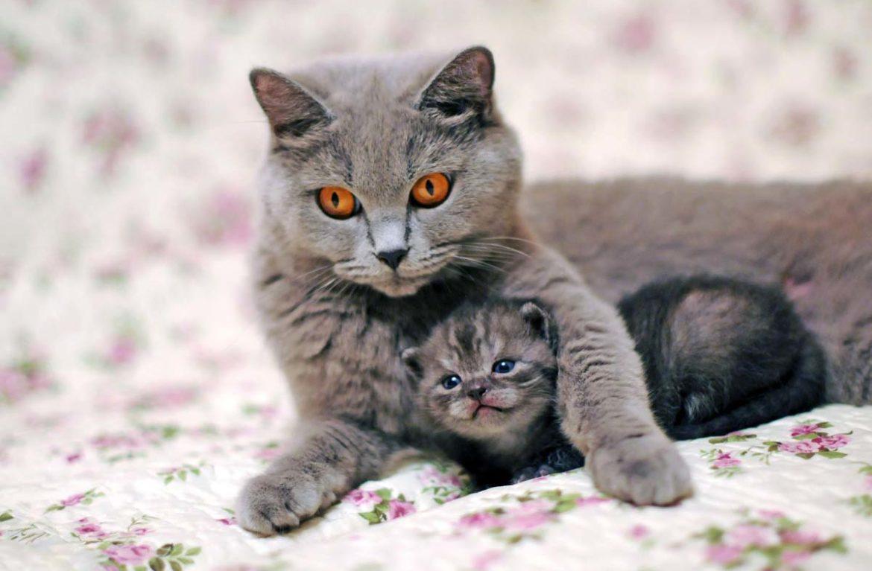 Кошка с котятами — фото от гениев воспитания