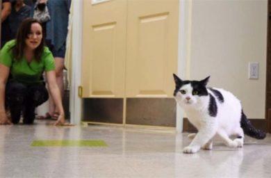 Кошка с шестью лапами