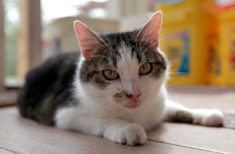 Кошка-клон, или Сиси против генетиков