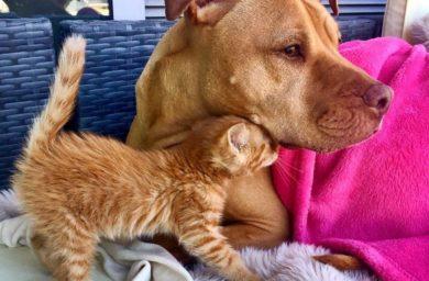 Кошка собака любят друг друга