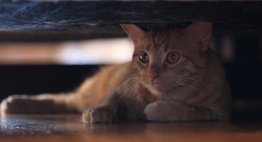 Кошка стала прятаться в темные места