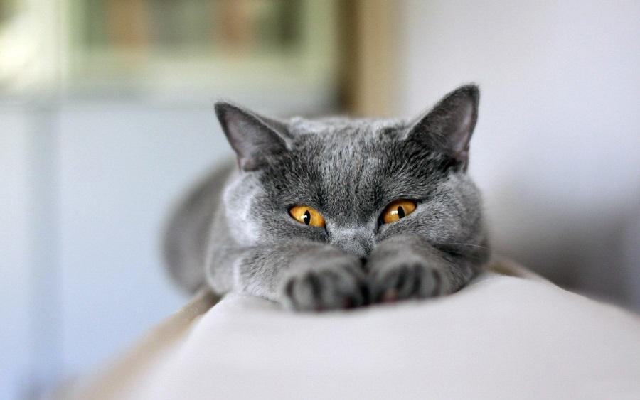 Кошка топчет одеяло