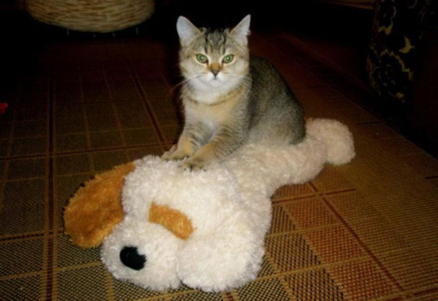 Кошка топчет задними лапами игрушку