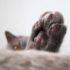 Почему кошка топчется задними лапами?