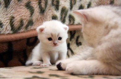 Кошка учит котенка: видео