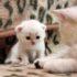 Мама-кошка учит котёнка! Трогательное видео