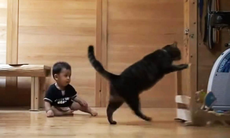Кот-учитель