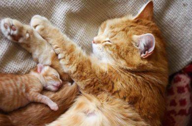 Кошка ухаживает за котятами: видео