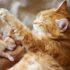 Как кошка ухаживает за котятами: видео