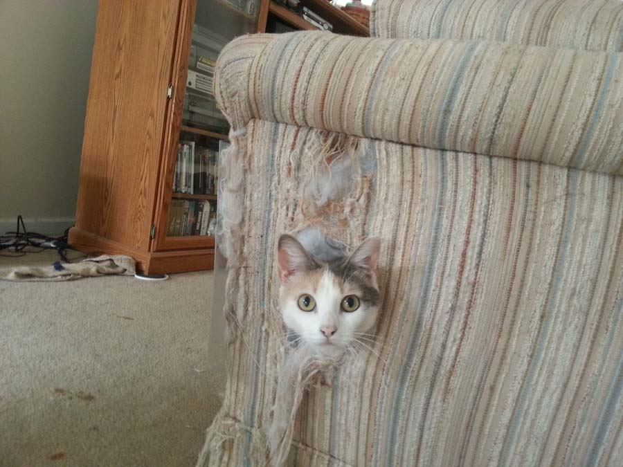 Кошка устроила погром