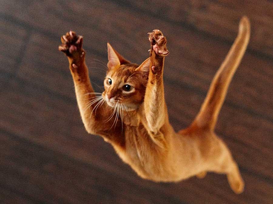 Кошка в литературе - рыжая «мстительница»
