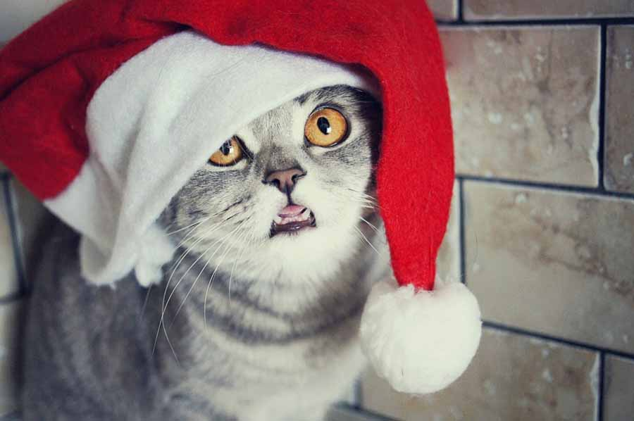 Кот в новогодней шапке: фото