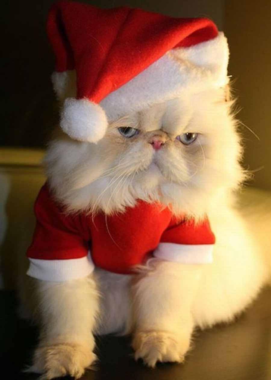 Кошка в новогодней шапке: фото