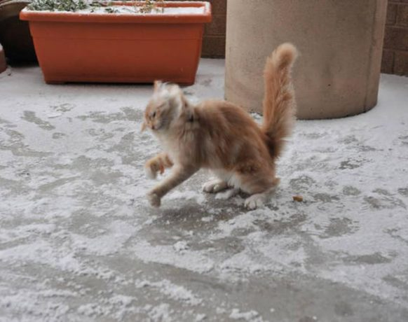 Кошка в снегу: картинки