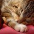Впадают ли кошки в зимнюю «спячку»?