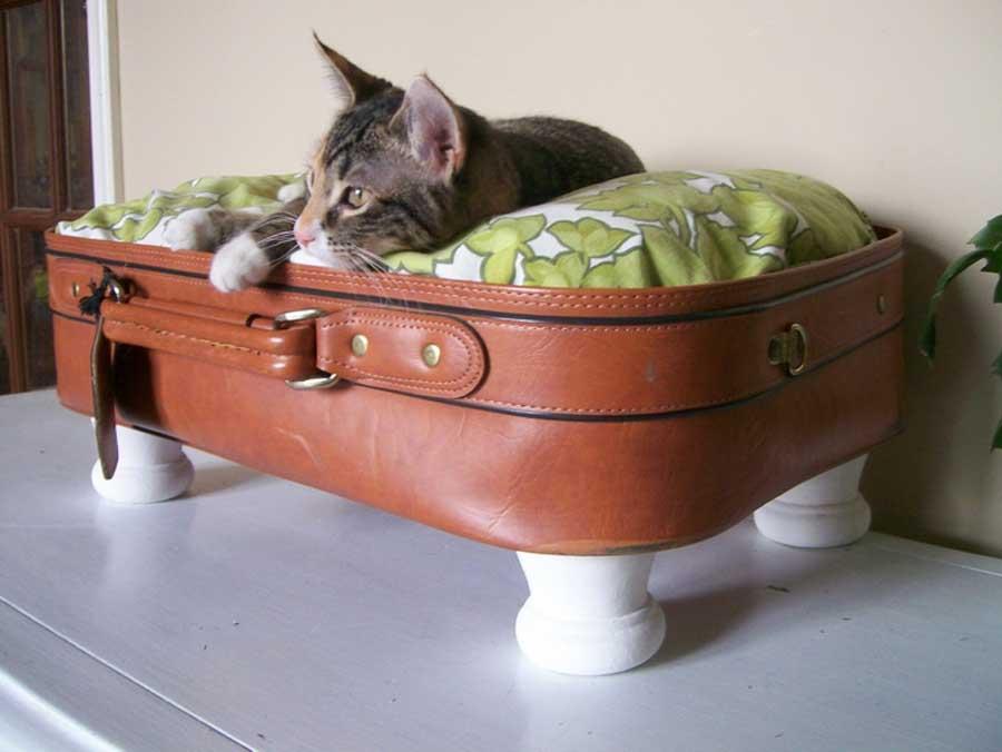 Кошка впала в спячку