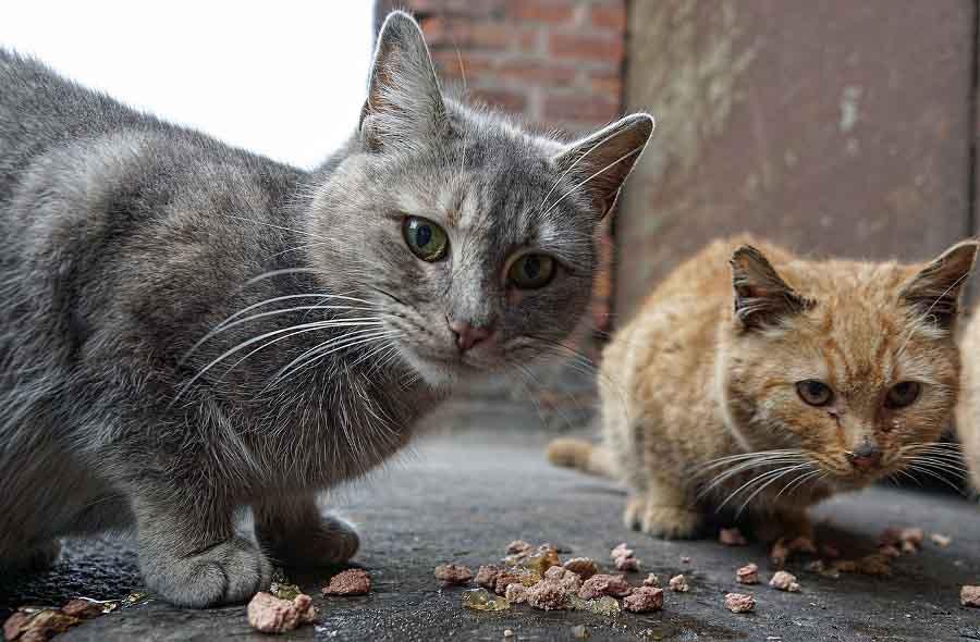Кошка закапывает миску с едой