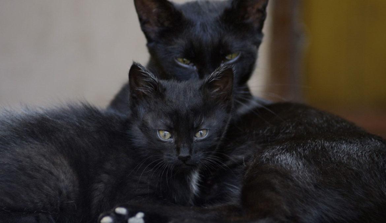 Кошка защищает котят от собаки (видео)