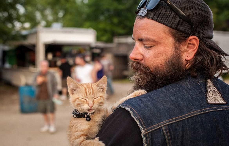 Кошки-байкеры