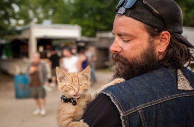 Кошки байкеры