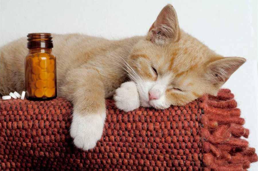 Кошки болеют гриппом