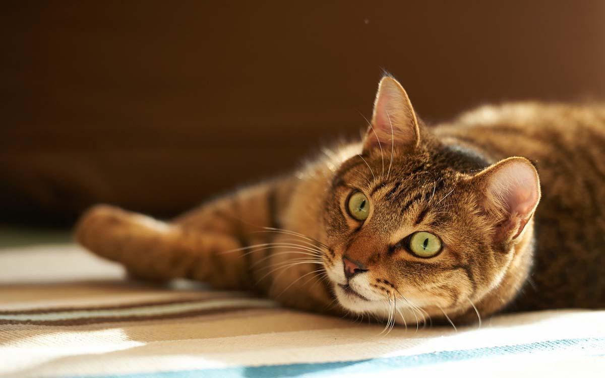 Кот смотрит любящими глазами