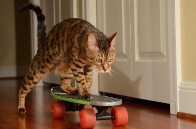 Кошки как люди: видео