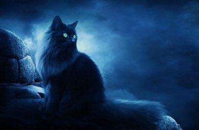 Кошки могут видеть параллельные миры