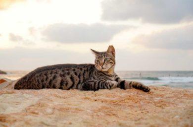 Пляж кошек в Италии