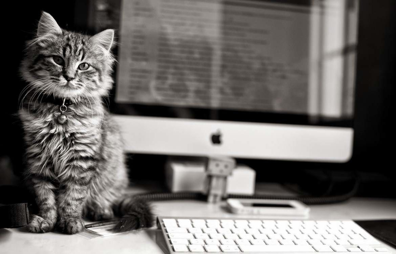 Кошки на работе, или кому точно не грозит безработица