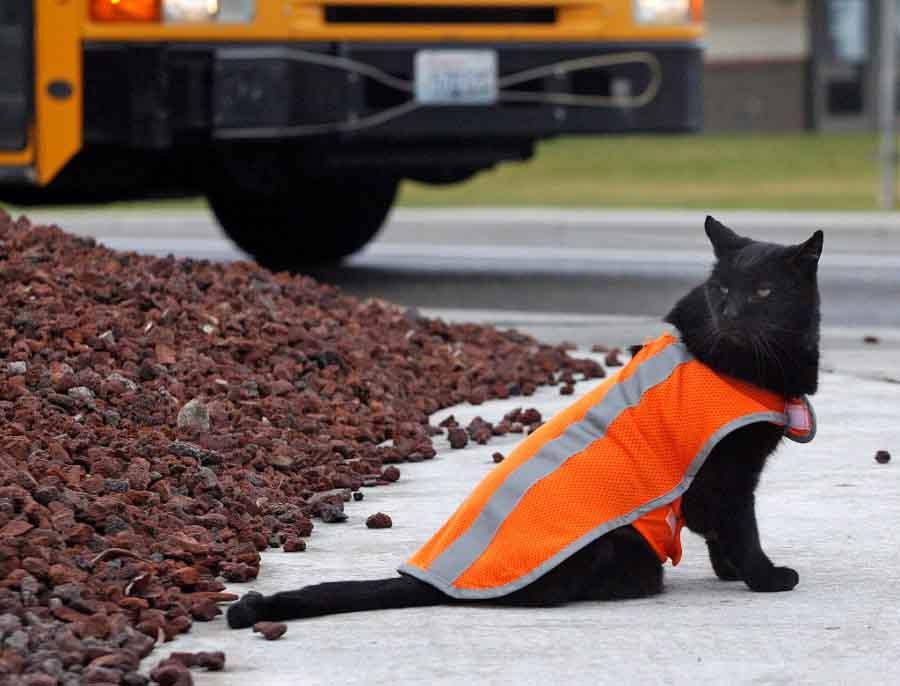 Кошки на службе