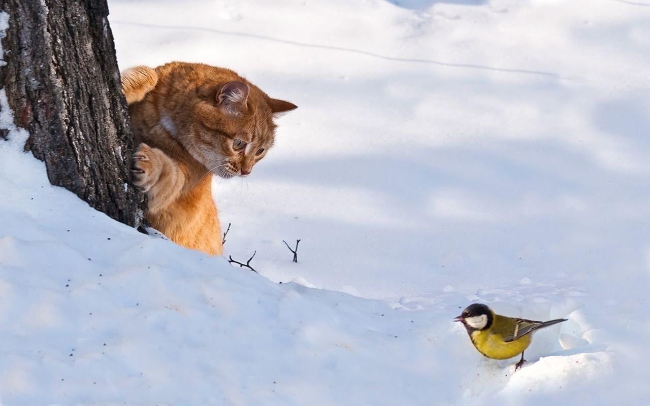 Почему кошки не едят пойманную добычу