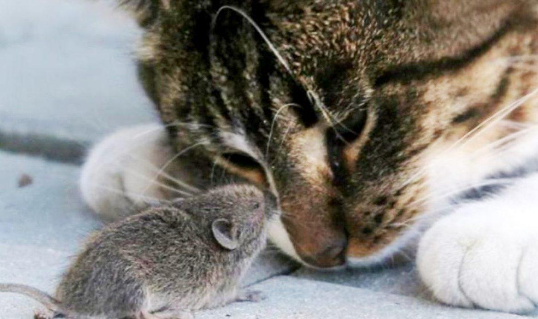 Почему кошки часто не едят пойманную добычу?